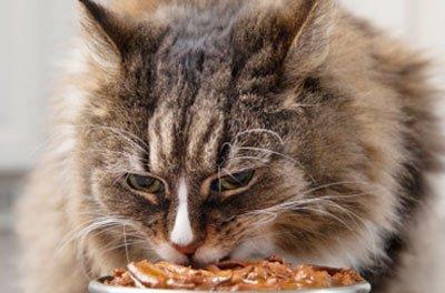 Пища для старых котов