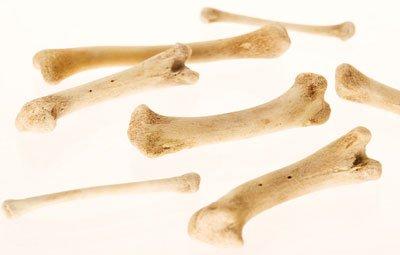 скачать бесплатно торрент кости - фото 8