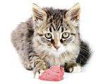 Какое мясо можно кошкам