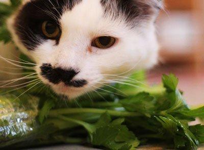 Какие овощи можно давать котам