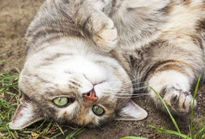 К беременной пристал кот