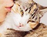 Почему кота нельзя целовать в морду