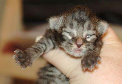 представлены на 7 день котенок открыл глаза начала