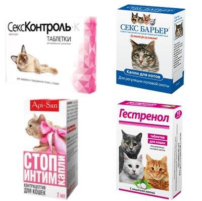 Контрасекс для котов