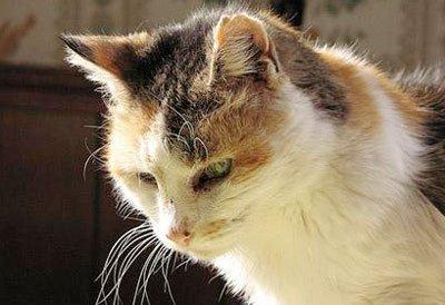 Как долго будет умирать коты