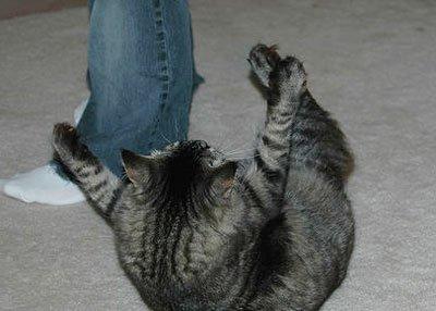 Кот кидается как отучить