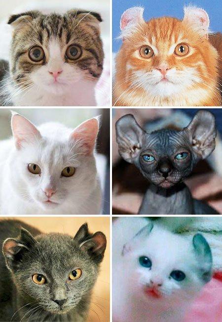 Для чего нужны уши котам