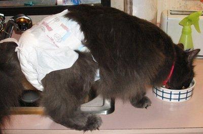 Подгузник для котенка своими руками