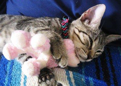Гормональная кастрация для котов