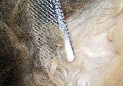 Почему в волосах образуются колтуны