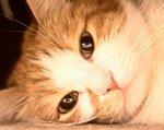 у кота слабый тонус мышц