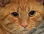 у кота гематурия