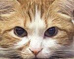 у кота опухоль