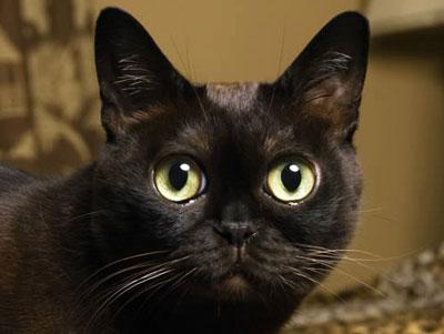 кот с медными глазами