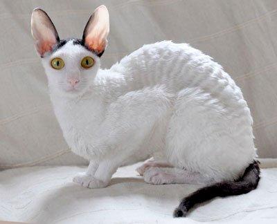 кот сидит на одеяле