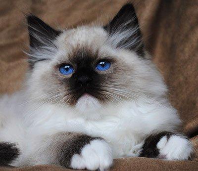 кошка тряпичная кукла