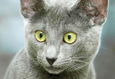 котёнок с жёлтыми глазами