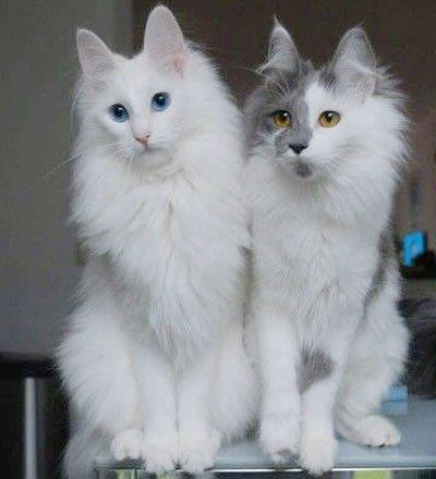 две кошки сидят рядом