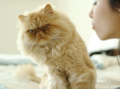 кот не любит целоваться