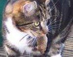 кошка несёт добычу хозяину