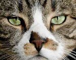 почему кошки не приживаются в доме