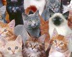 типы шерсти кошек