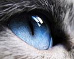 зрение у котов